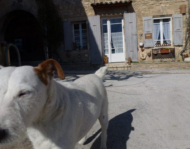 11-dog-provence-lacoste