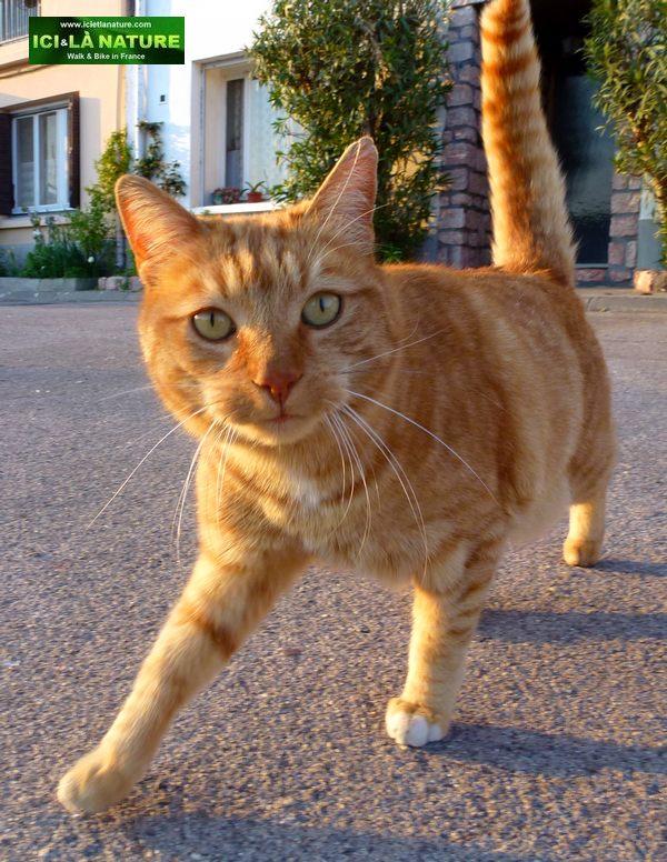 02-cat-marseillan