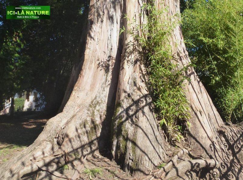 10-guernika-gernika-tree-basque-museum