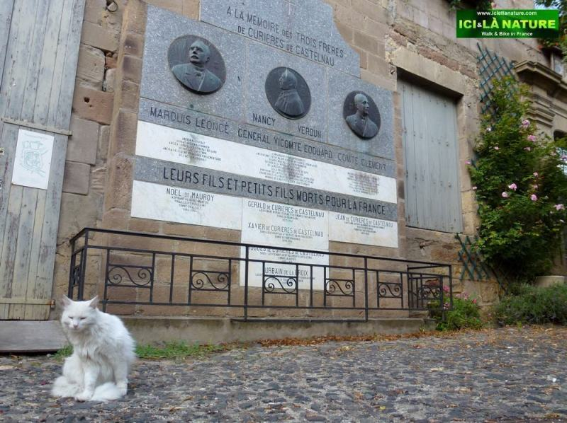 12-white cat on the way le puy france