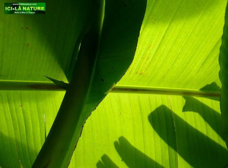 16-green ainhoa