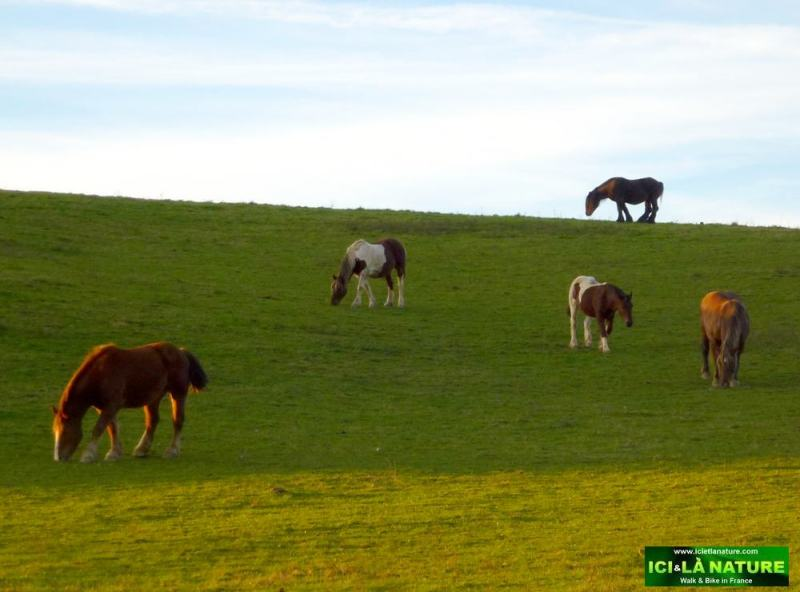50-landscape horses basque country france