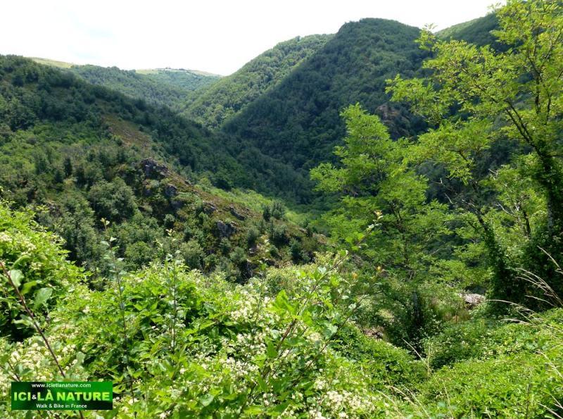 55-landscape camino aveyron france