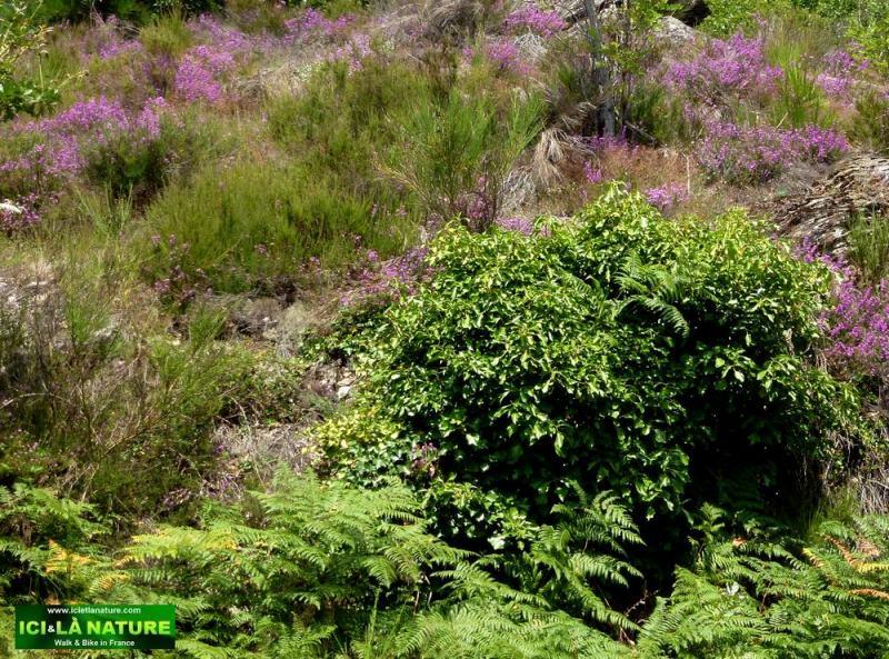 56-nature landscape camino france