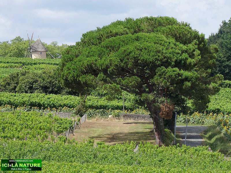 landscape france bordeaux vineyard