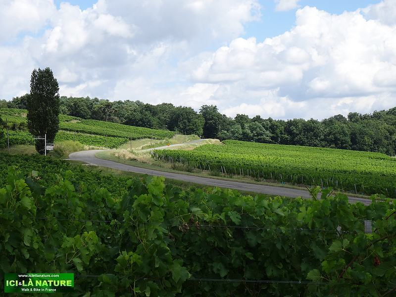 landscape vineyards france bordeaux