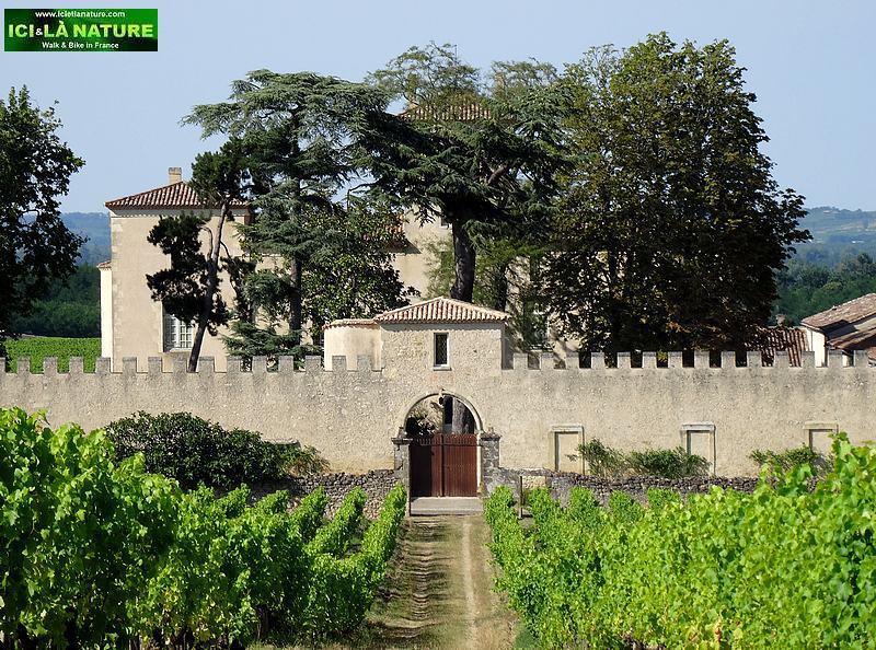11-chateau lafaurie peyraguey sauternes