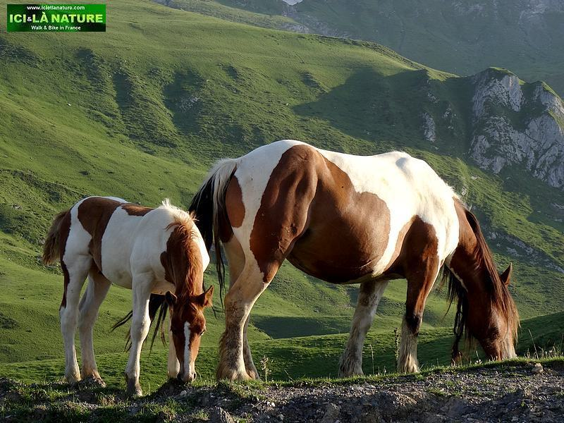 23-wild horses hiking pyrenees mountains