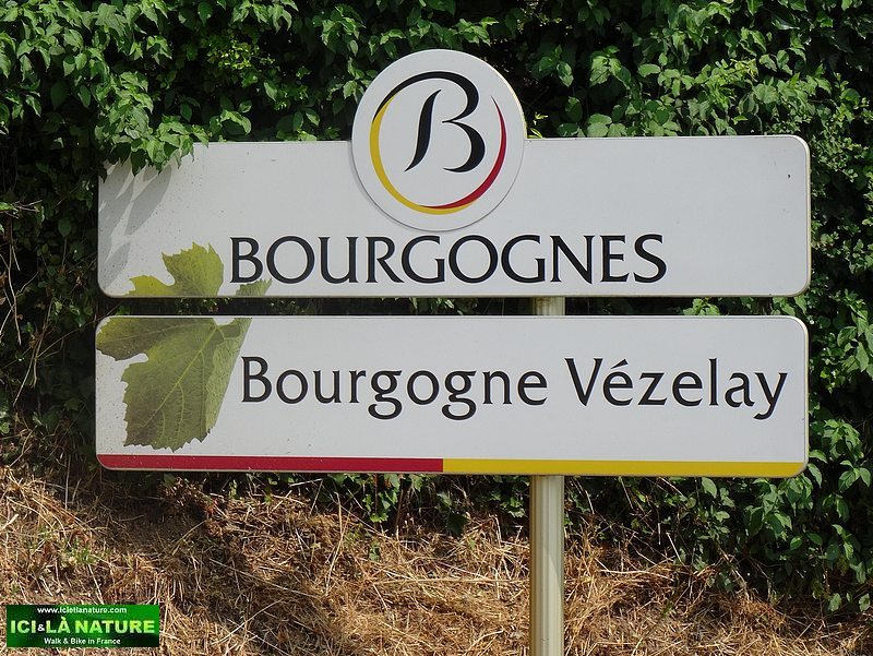 30-Burgundy vezelay wine