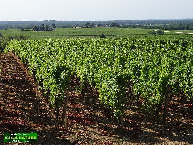 48-landscape vineyards chateau yquem
