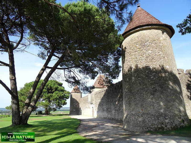 51-chateau yquem sauternes wine