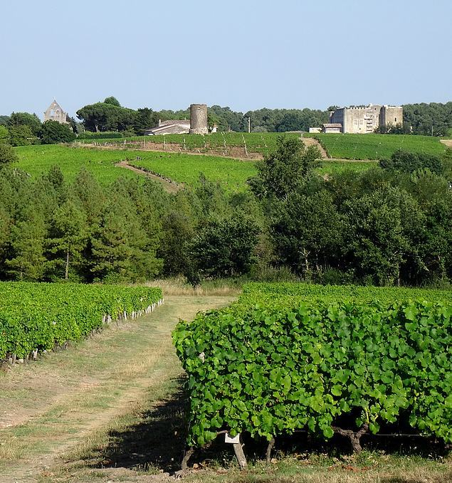 67-landscape bordeaux sauternes vineyards