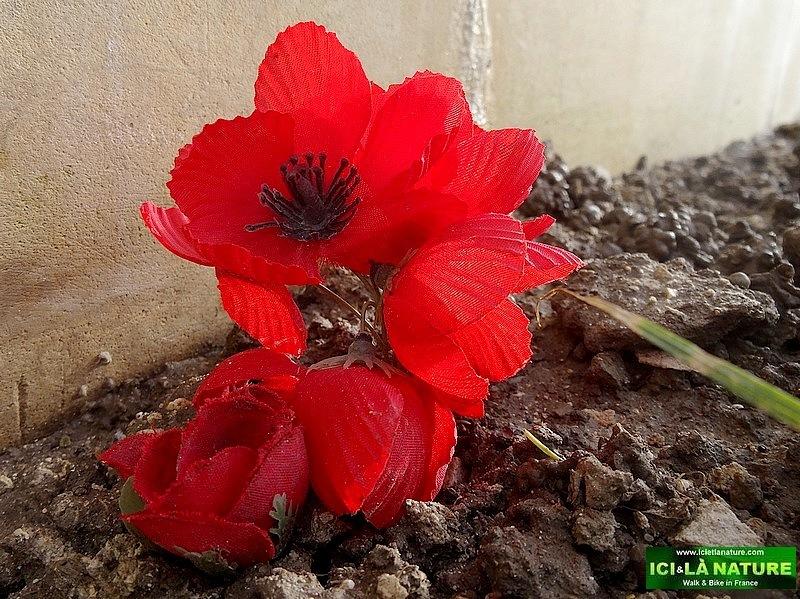 12-australia rembrance poppy france