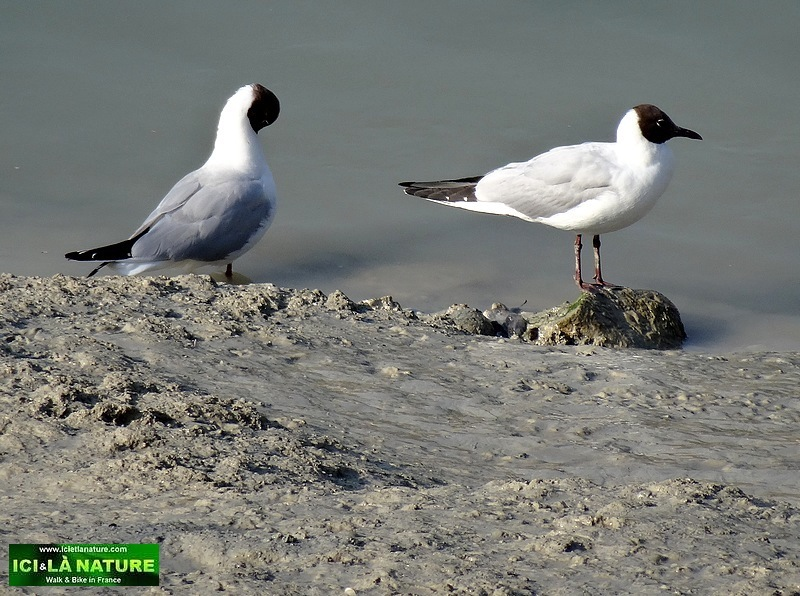 25-hiking holidays france sea birds