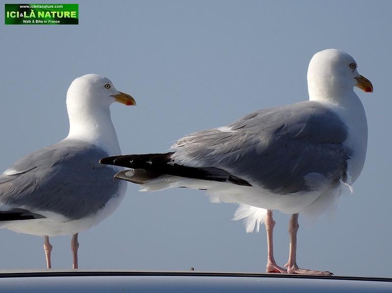 26-walking holidays france sea birds