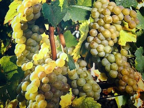 87-wine tour france