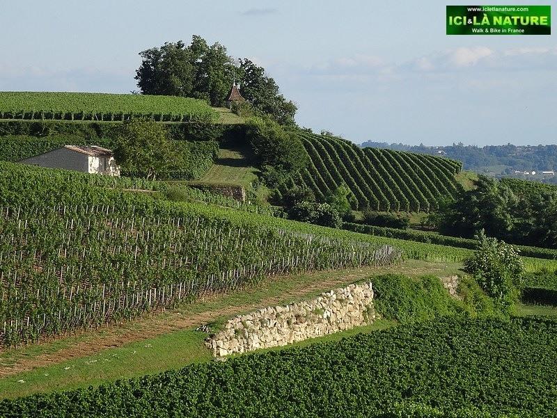 09-saint emilion landscape bordeaux landscape
