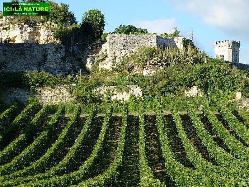 51-bordeaux world heritage landscape cycling tour