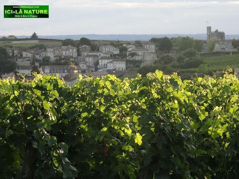 58-saint emilion landscape bordeaux