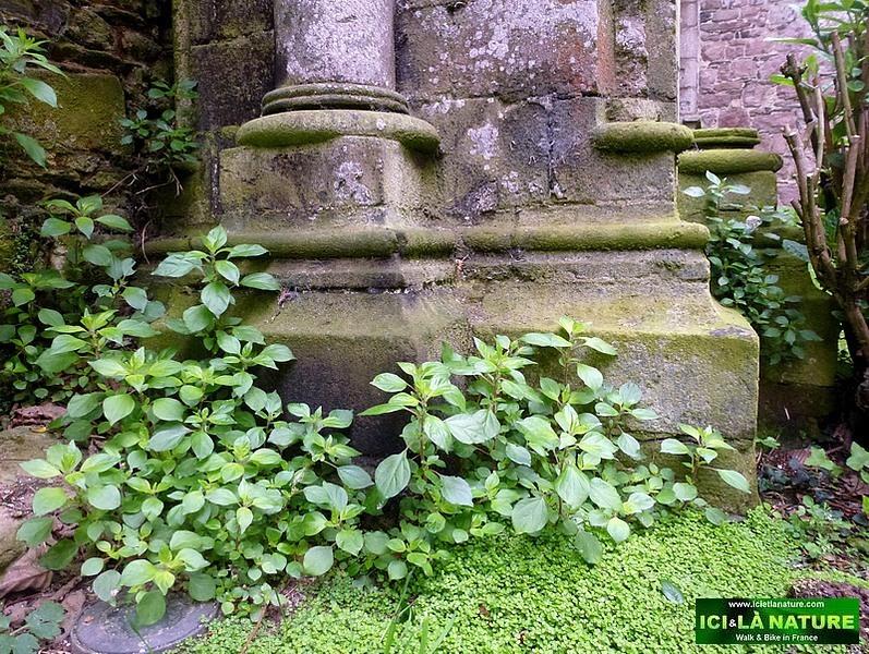 30-beauport abbey france