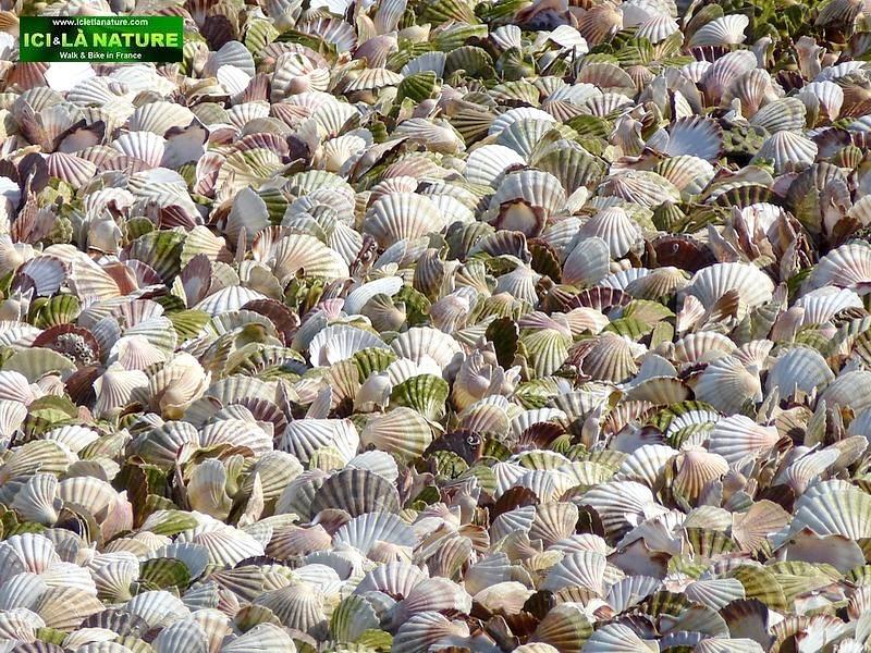 30-shells normandy port en bessin