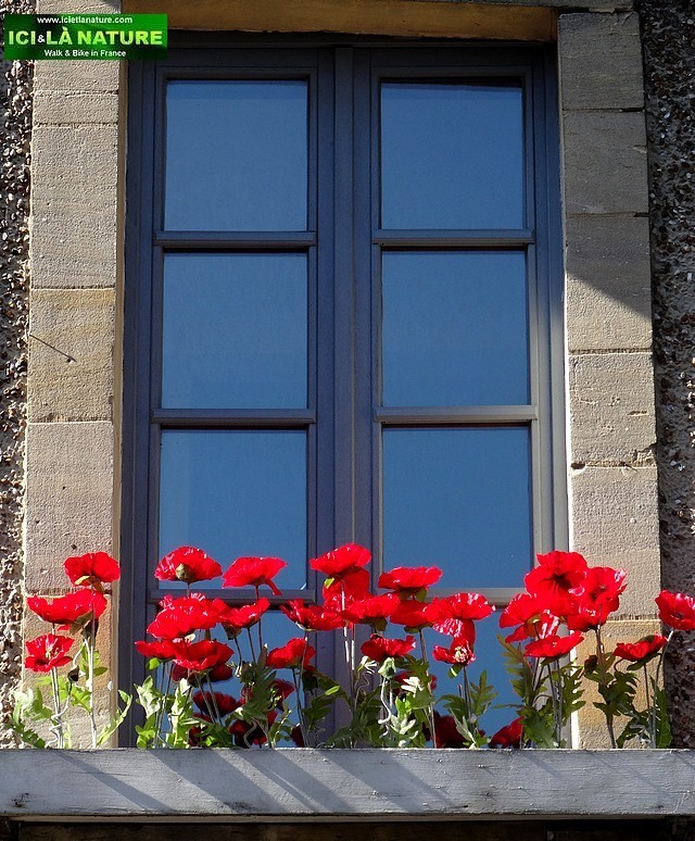 36-poppies normandy bayeux