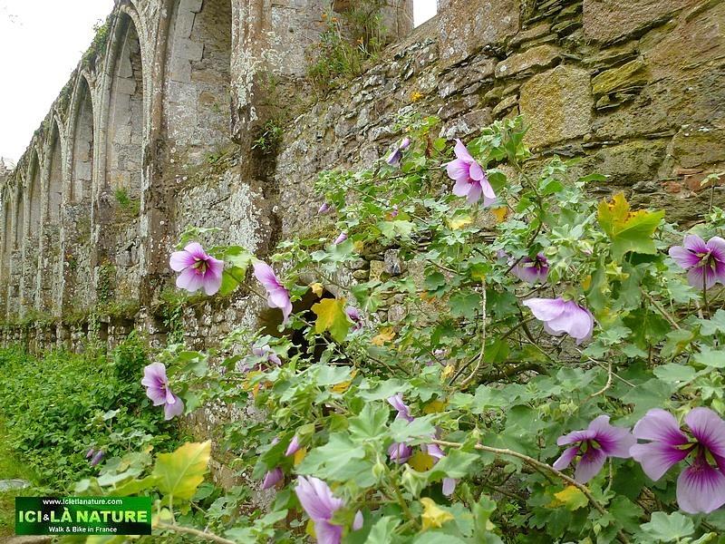 39-abbaye bretagne beauport