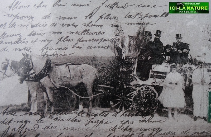 40-old postcard horses