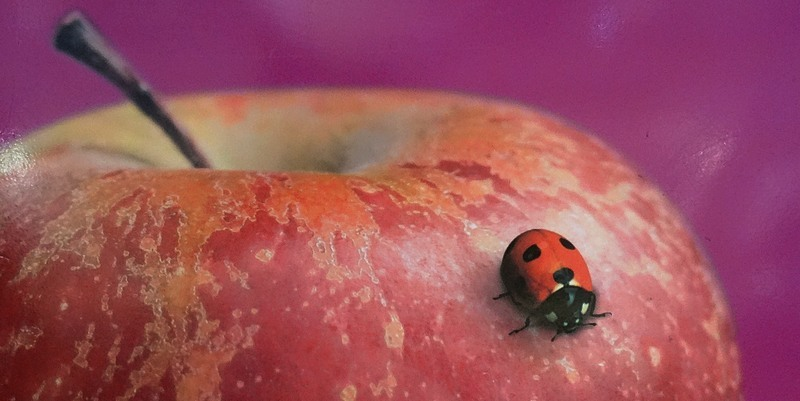 001-apple