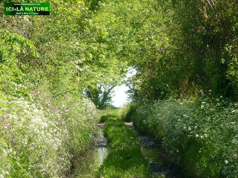 18-hedges battle normandy 1944