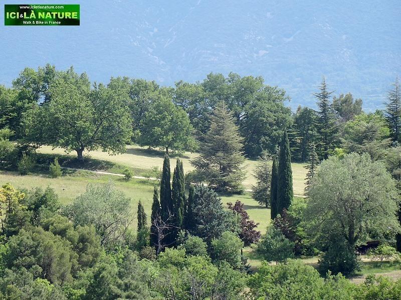43-landscape picture provence