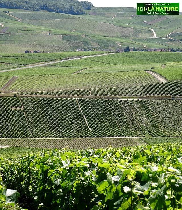 47-vineyards epernay champagne