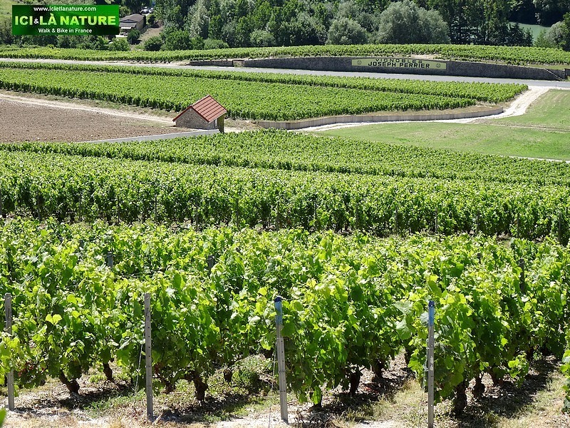 50-vignoble champagne epernay