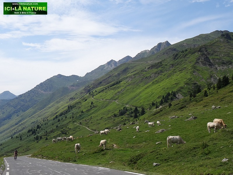 17-tour de france 2014 pyrenees mountains
