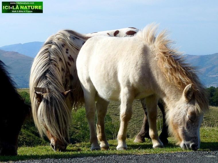 54-wild horses basque country mountains