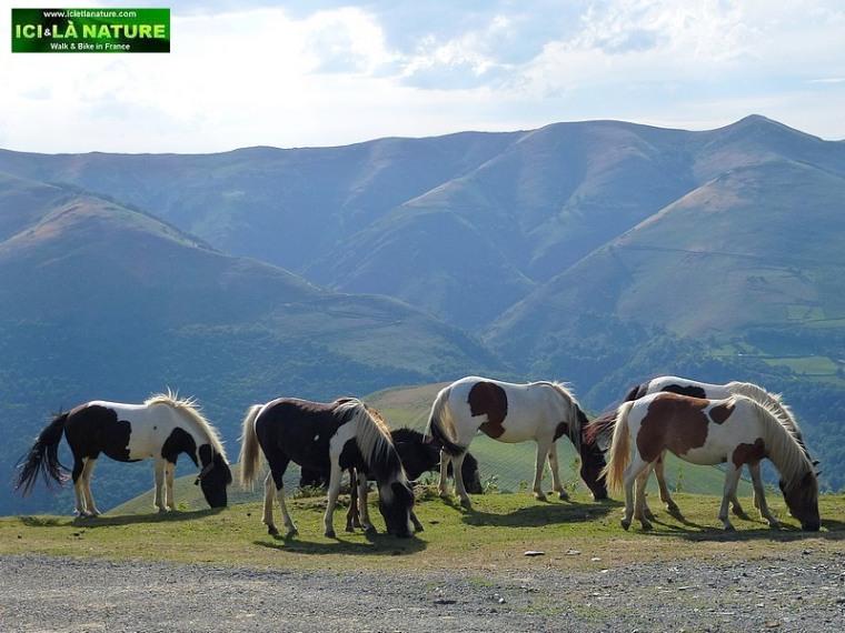 55-wild horses mountains france