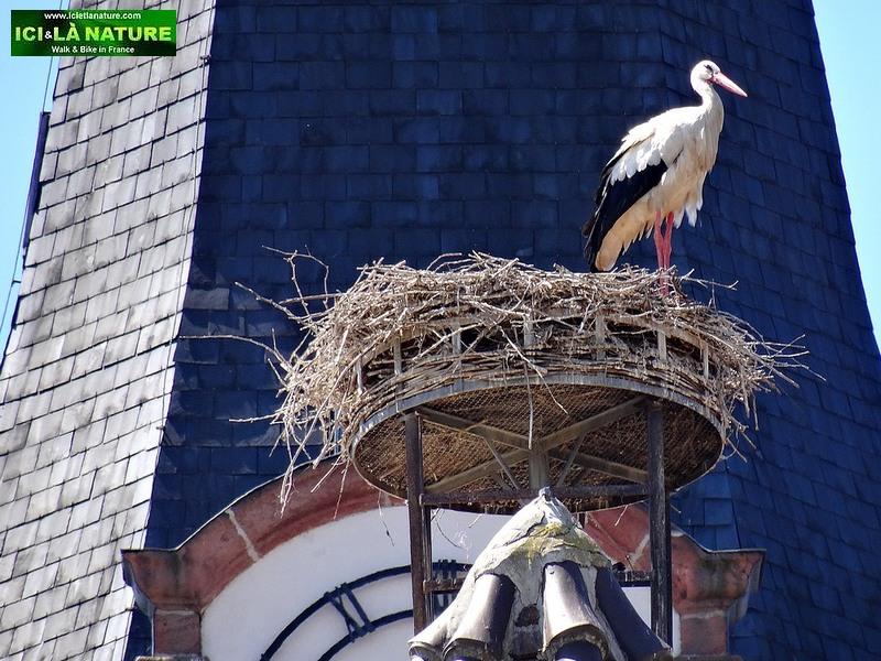52-stork's nest alsace france