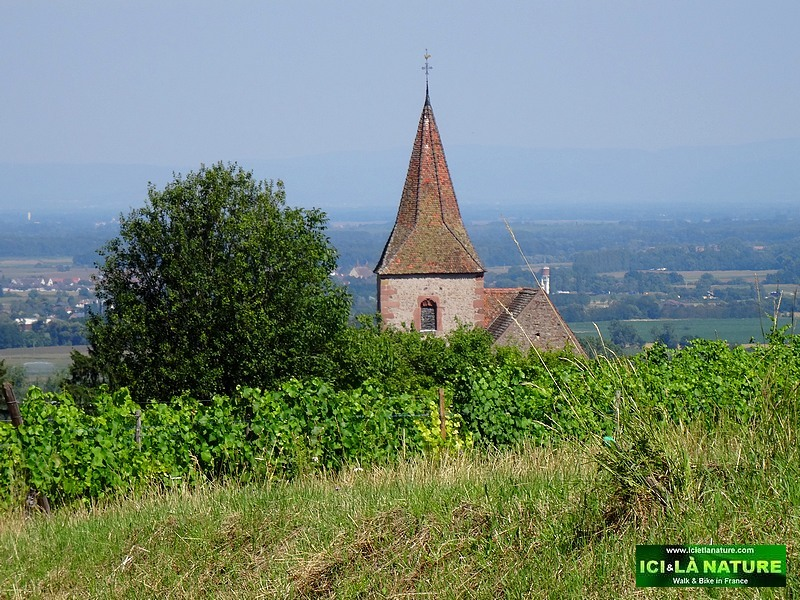 59-clocher vilage vigne alsace