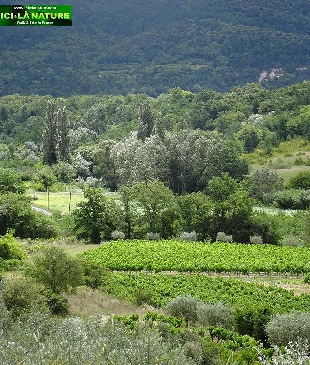 51-provence landscape photo