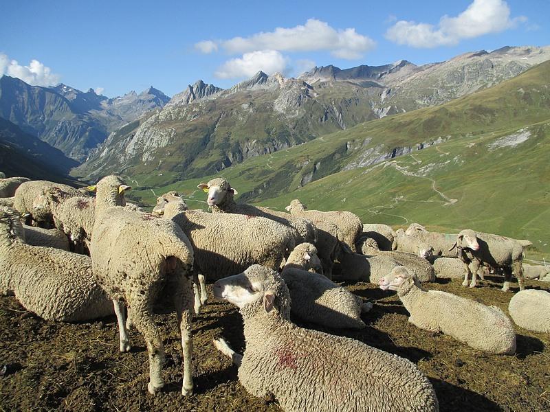 ici et là nature tour du Mont Blanc walk and bike in France