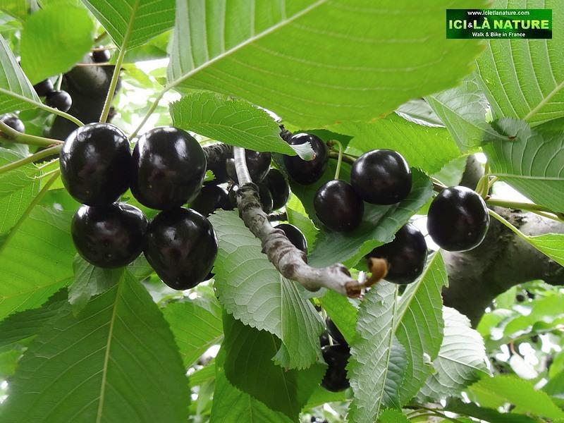 62-fruits de provence