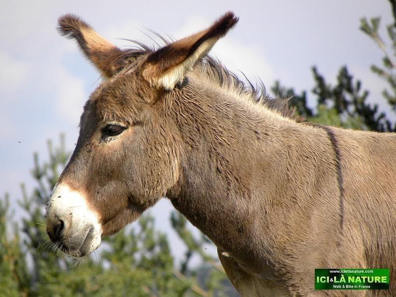 01- donkey travel with a donkey