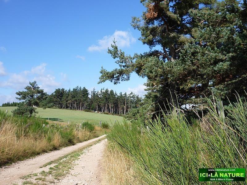 04-stevenson trail lozere