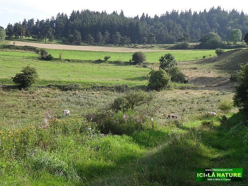 09-stevenson trail cevennes