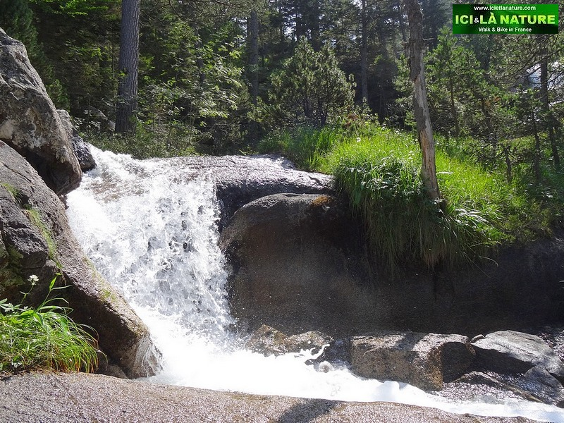 43- foret torrent pyrenees