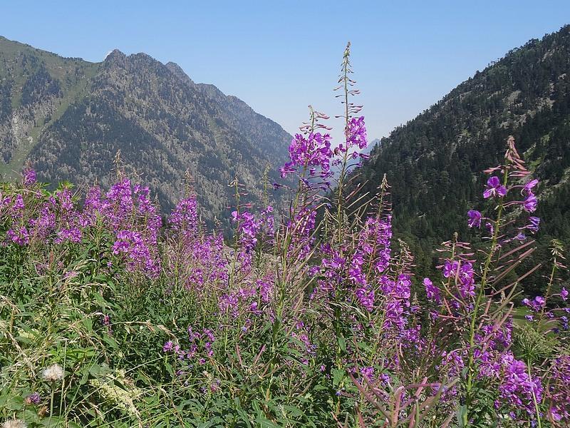 49-fleurs de montagne
