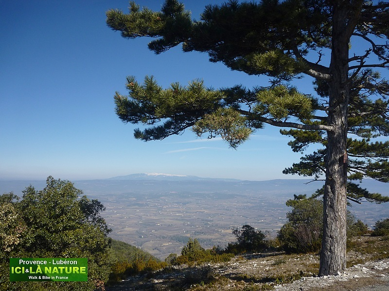 26-provence landscape image mont ventoux