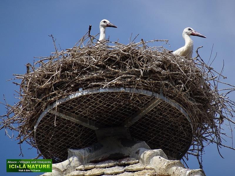 29-white storks europe