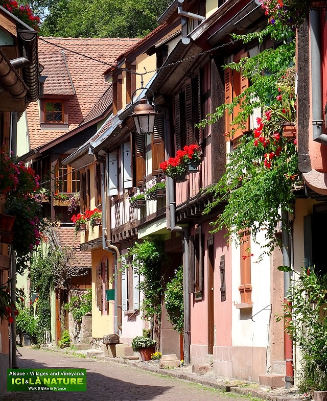 42-alsace tour by bike france