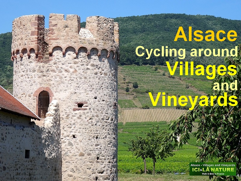 alsace biking cycling tour holidays wine road trip